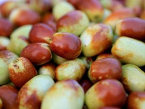 鲜枣的功效与作用 小小果实却蕴含巨大能量令你意想不到