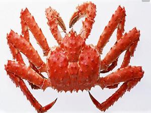 帝王蟹多少钱一斤 帝王蟹身体为什么不吃原因竟是如此