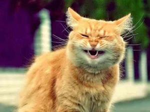 买房当猫宅被投诉 养宠物也会激起民愤