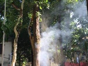一棵枫杨热得冒烟 高温天气连树都自燃