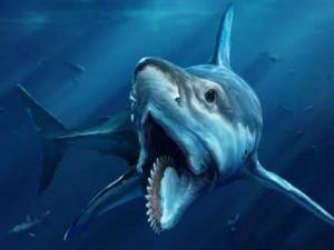 史前海洋三大霸主 沧龙吃巨齿鲨图片引哗然