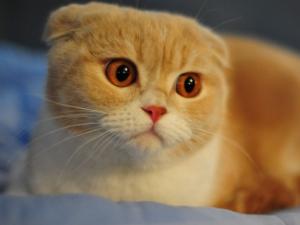 猫喜欢和你睡的五个原因 其中一个超扎心令