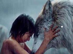 狼为什么会养人类婴儿 被养大后习性与狼相仿最后都怎样了