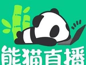 熊猫关闭服务器怎么回事 熊猫直播为什么破产了