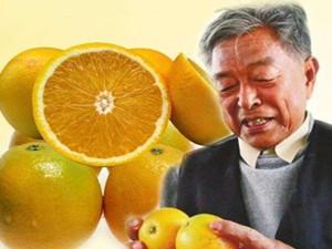 褚橙真有那么好吃吗 褚橙和赣南脐橙对比其