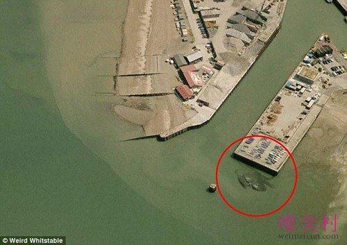 世界最大的螃蟹