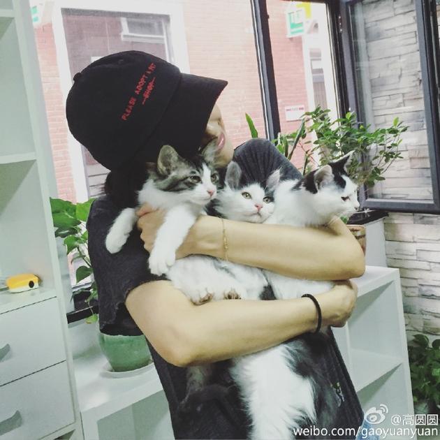 高圆圆戴帽抱猫咪 很美