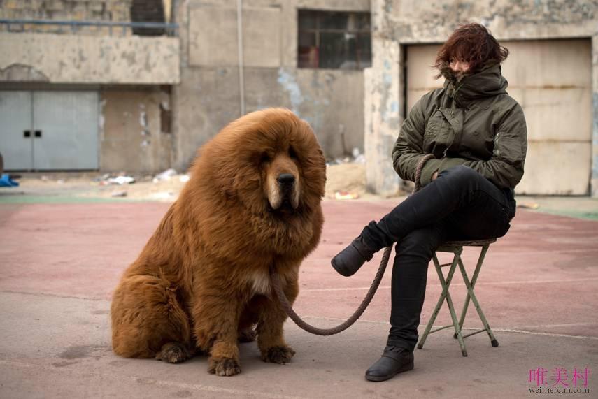 世界上最贵的狗排名 5