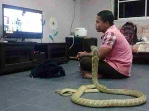 泰国惊现人蛇恋 男子与蛇结婚同居