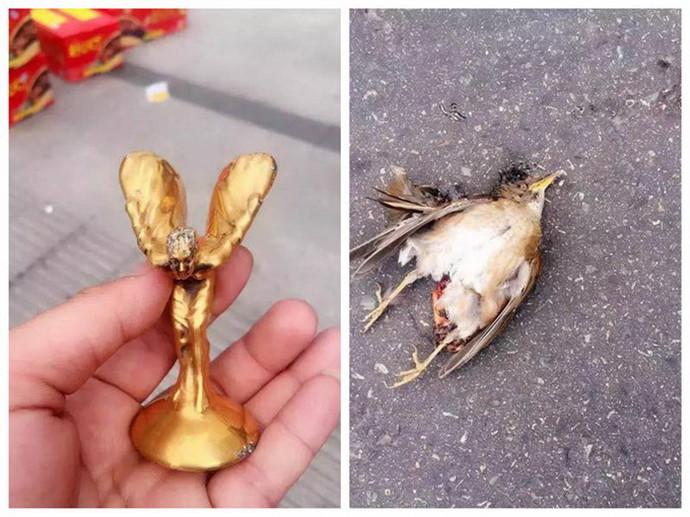 小鸟撞上劳斯莱斯,千万豪车毁于一旦