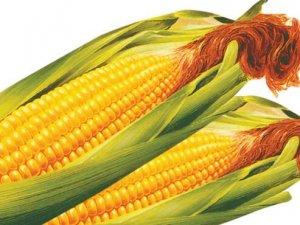 农民王力军收购玉米刑事处罚 最高法再审后改判