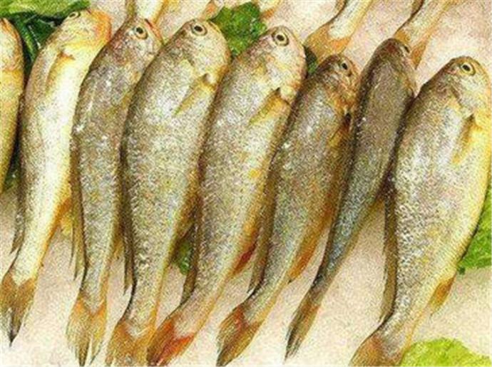 青岛大虾算什么,深圳两条小黄鱼就要4628