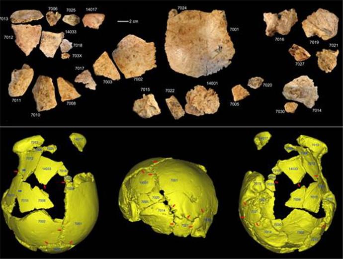 河南发现人类化石,疑似是人类进化过程中的