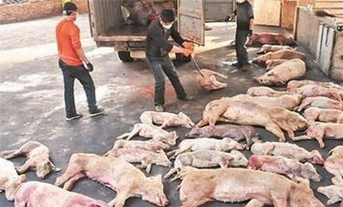 万斤病死猪肉卖出,不知道祸害了多少无辜的