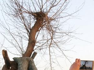 道路最牛钉子树,这阵仗比当年的钉子户还要大