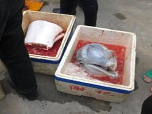 市民当街杀白海豚 保护稀有动物的意识何时