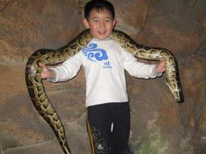 蟒蛇为报恩竟然当起保姆 蟒蛇也能知恩图报