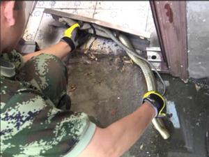 2米长蛇钻幼儿园 吓坏小孩子消防官兵将蛇救出后放生