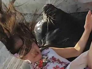 逗海狮玩被拖入水 事件详细始末经过曝光还好有惊无险