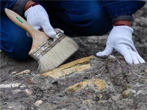 系统发掘吉林恐龙化石群 唯一城市发现的恐龙化石群-河南发现人类