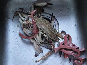 买螃蟹皮筋一斤重 摊贩这种行为是否属于宰客?