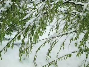 大兴安岭六月飞雪 夏天看雪清凉一夏不是梦