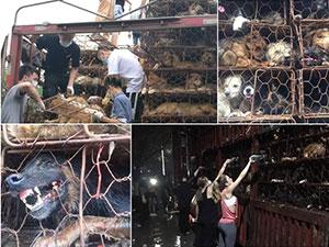 广州爱狗人士拦车 车上装有上千只猫狗神情