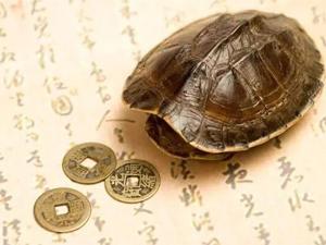 公园内海龟误吞硬币死亡 致命硬币出现或因