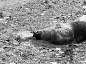 路边发现棕熊尸体 还是一只未成年棕熊