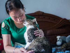 杭州阿姨养流浪猫17年 竭尽所能给猫咪一个家背后尽是心酸