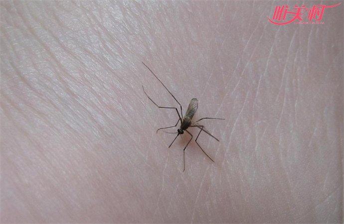 谷歌释放改造蚊子
