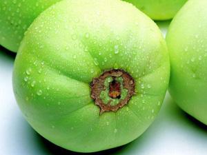 爱吃香瓜的你对香瓜了解多少 香瓜瓜蒂有毒你知道吗?