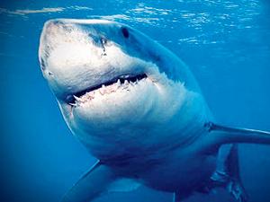 女子徒手挖鲨鱼眼逃生 弱质女子缘何能从鲨