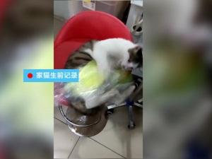 男子睡前翻微信 才发现自家猫咪惨遭猛犬咬