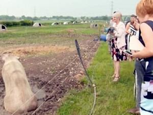 租50只猪举办婚礼 新郎对新娘绝对是真爱啊