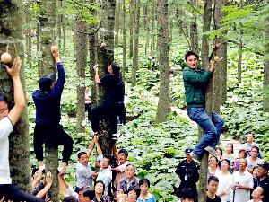 回归自然亲近自然拥抱自然 河南举办爬树大