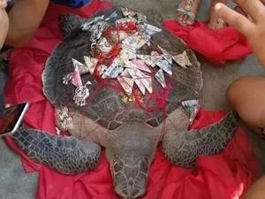 渔民捕百斤大海龟 大海龟为吉祥物放生为自