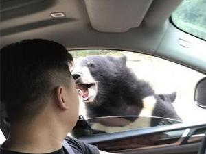 八达岭动物园熊咬伤游客 现场画面曝光手臂