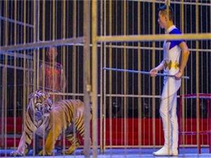 老虎扑倒驯兽师 驯兽表演突现惊魂一刻