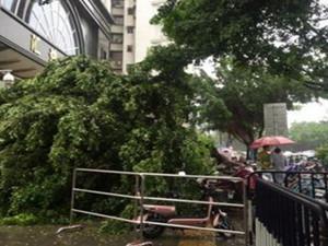 直击华南台风最新消息 华南地区的小伙伴们要挺住了