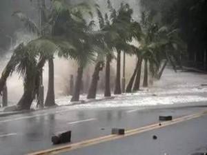 飞鸽袭澳伤亡惨重 百年难得一遇的台风袭击