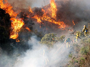 洛杉矶山火爆发 火势猛烈数百人痛失家园幸无人伤亡