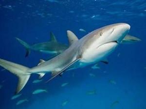 美国一名男子地下室养鲨鱼 已有3条已经死亡