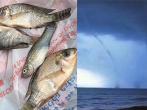 天空竟下起了鱼 活蹦乱跳的鱼从天空掉下居