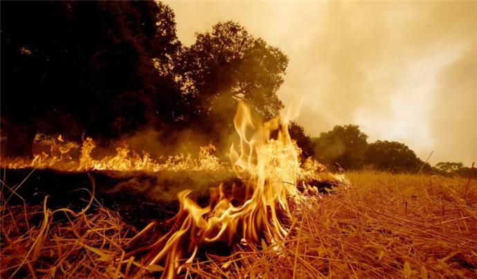 美国加州发生森林大火