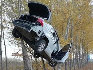司机神操作让车飞上树 老司机神技能带你飞