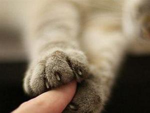 男子被猫抓死亡 皮肤留抓痕未慎重多月后突现严重症状