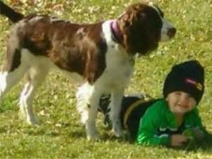 忠犬寻回2岁失踪主人 比警方率先找到男童一