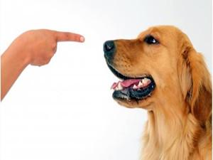 研究称狗狗会读心术 狗狗的这些表现你看懂了吗