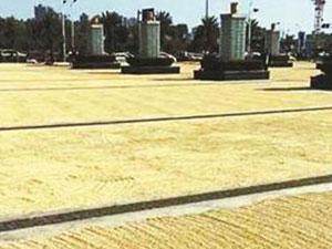 火车站广场被稻谷铺满 金灿灿一片犹如遍地